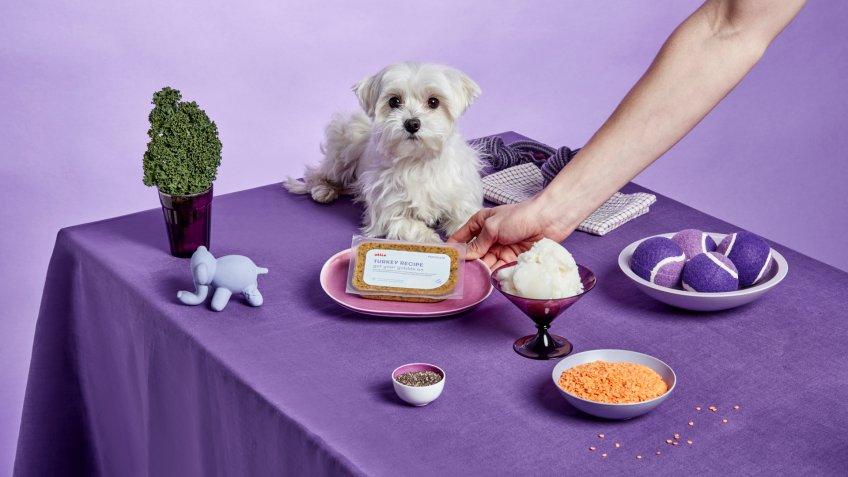Ollie dog food pet startups