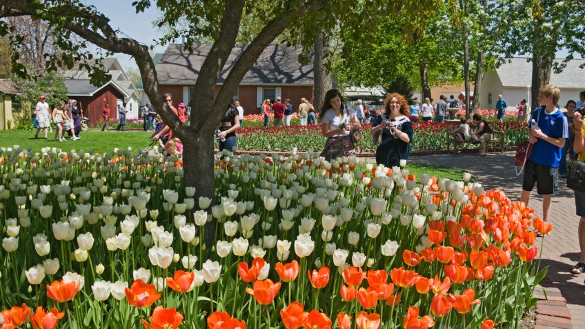 """""""Pella, Iowa, USA - May 7, 2011: Visitors stroll among the tulips that are showcased in the town of Pella, Iowa, during the annual Tulip Time festival."""