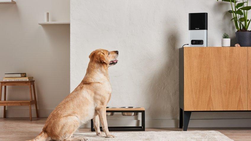 Petcube Bites pet cameras pet startups