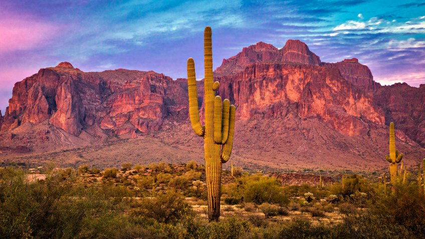 Saguaros at Sunset in Sonoran Desert near Tempe Arizona.