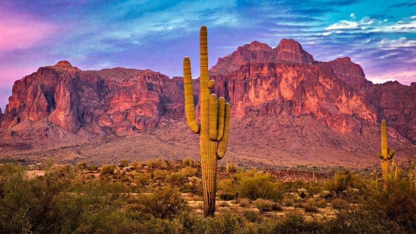 Saguaros at Sunset in Sonoran Desert near Tempe Arizona.