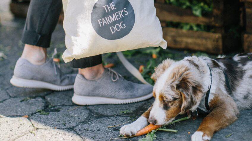 The Farmer's Dog pet startups