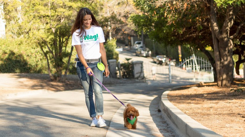 Wag dog walking pet startups