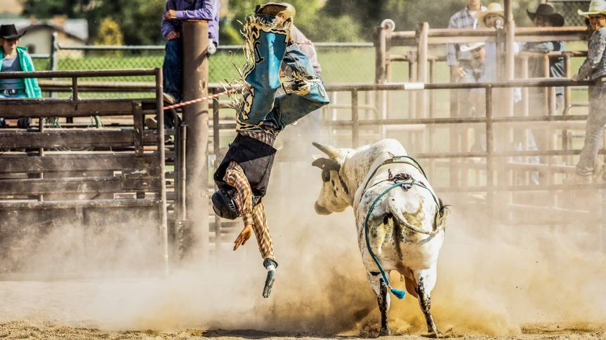 Bull Rider is Thrown from a Bull during Rodeo Competition.