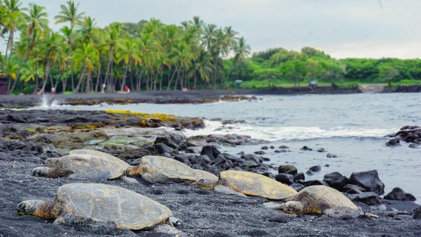 Punalu´u Bay, Black sand beach, The Big island, Hawaii, Turtle beach