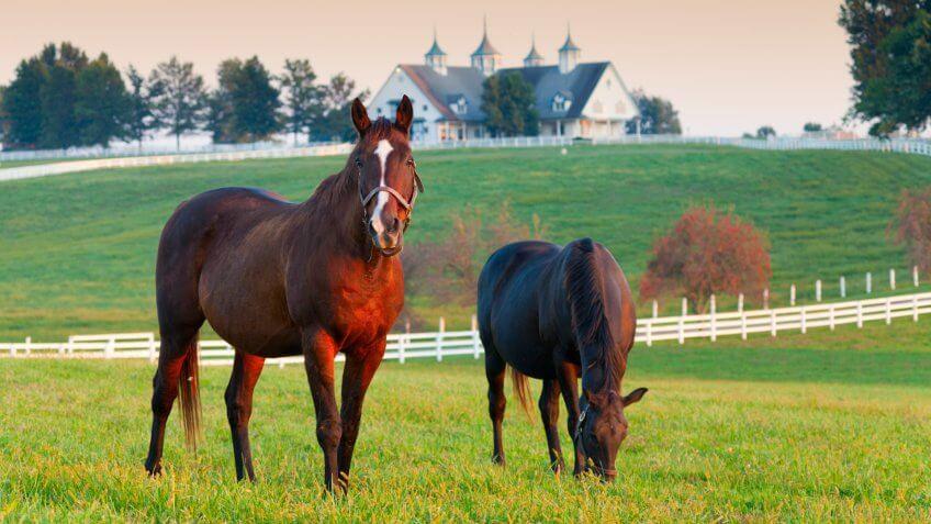 Horses in the fields on a farm in Lexington, Kentucky.