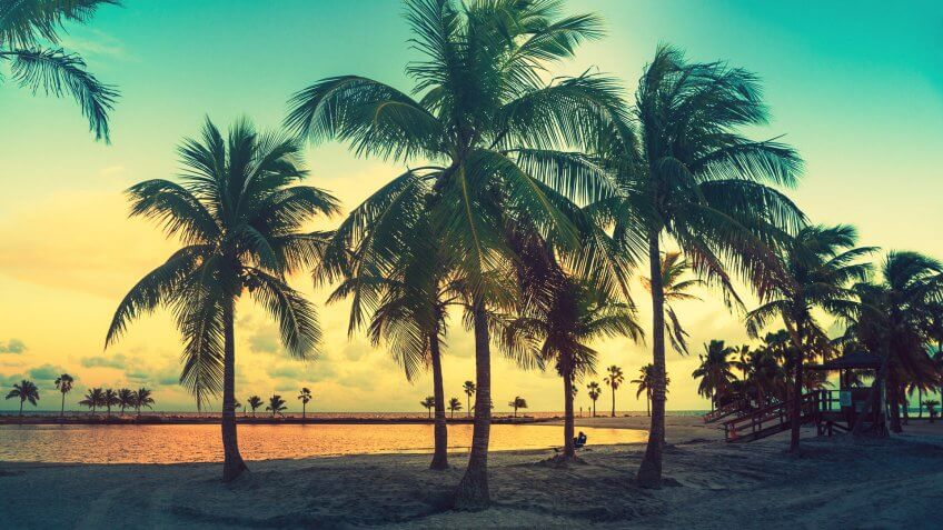 Miami Florida sunset with palm trees