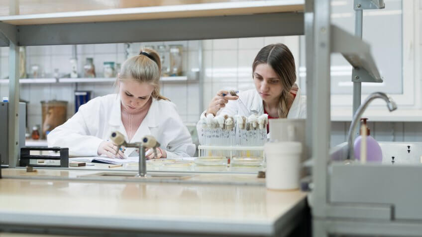 The group of women, college students, working together in the microbiology laboratory.