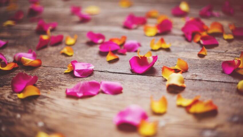 Beautiful rose petals.
