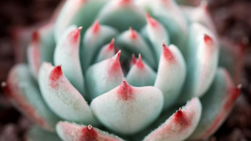 Close up of succulent plants backgruond.