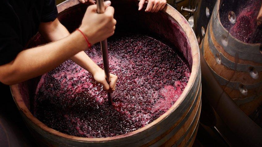 winemaking college major