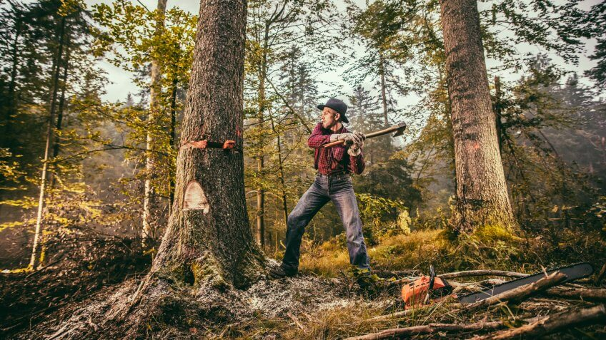 Forester using axe while cutting tree in forest.