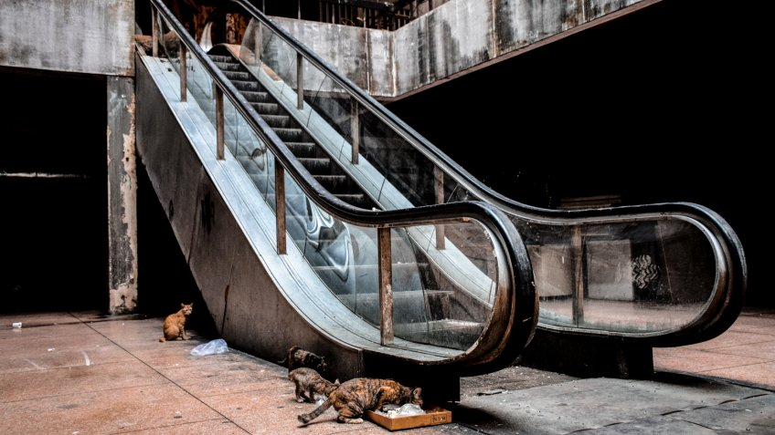 abandoned escalator and feral cats