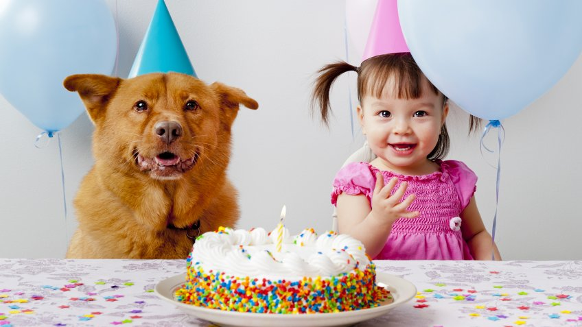 Girl and dog celebrating birthday.