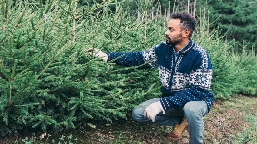 Young adult man choosing a Christmas tree.
