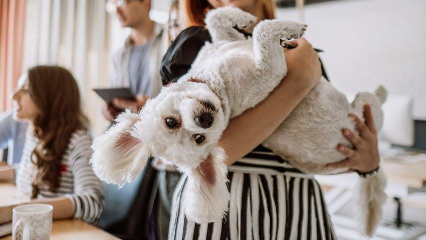 Pet friendly workspace.