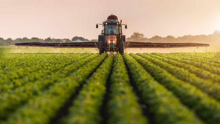 soybean farmer at sunrise