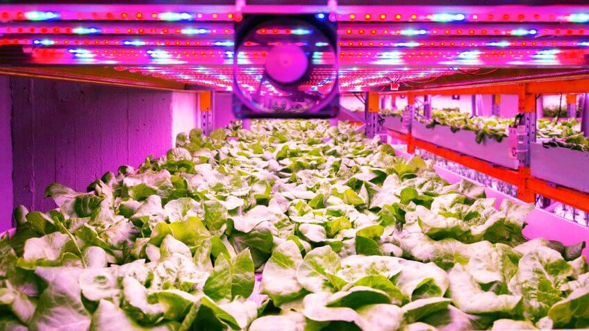 Ventilator and special LED lights belts above lettuce in aquaponics system combining fish aquaculture with hydroponics, cultivating plants in water under artificial lighting, indoors.