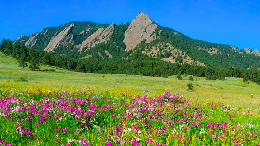 Boulder Colorado Iconic Flatirons with Foreground of Sweet Pea Blossoms - Image.