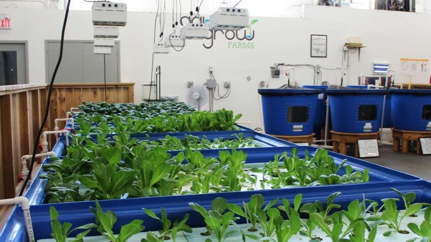 AquaGrow Farms