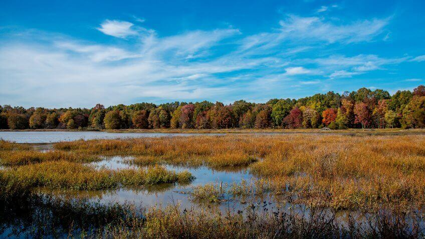 Autumn colors in the Huntley Meadows Park in Virginia - Image.