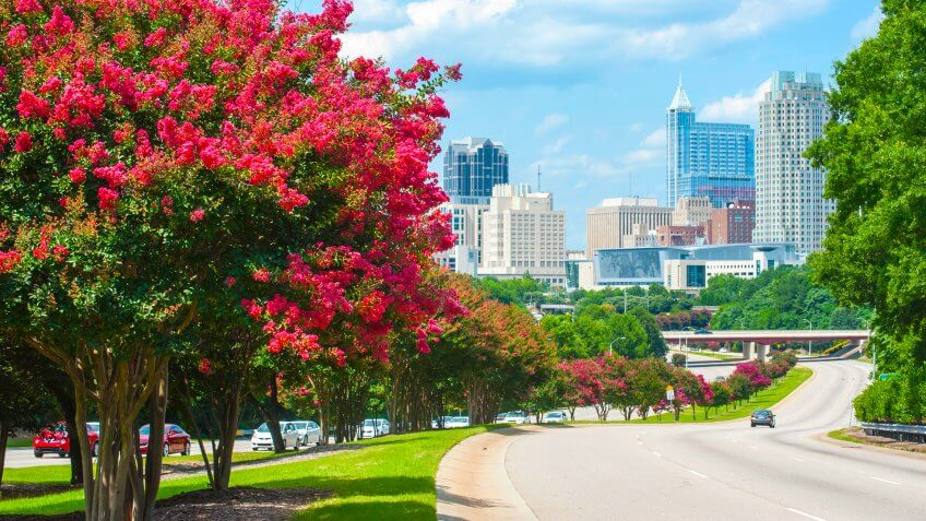 Raleigh skyline in the summer with crepe myrtle trees in bloom - Image.