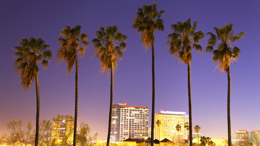 Downtown San Jose skyline with palm trees at night.