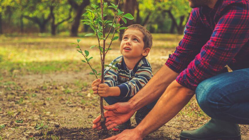 Curious little boy helping his father to plant the tree while working together in the garden.