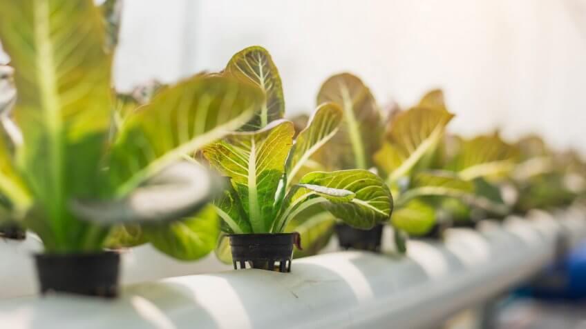 hydroponic indoor farming plant