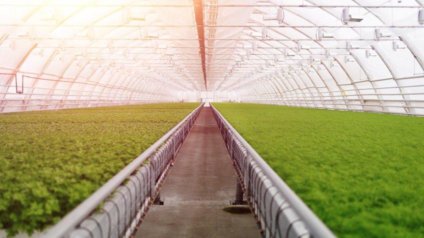 hydroponic indoor farming