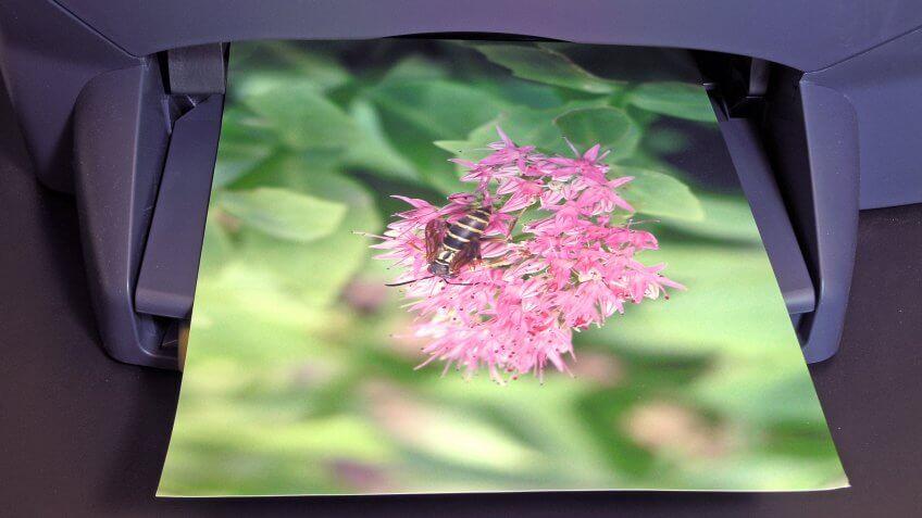 Printer printing color photo - Image.