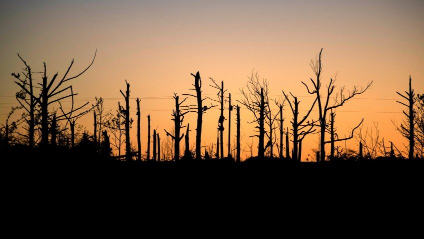 Beauregard Alabama tornado stripped trees