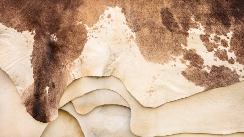 Pile of different brown with white cow hides - Image.