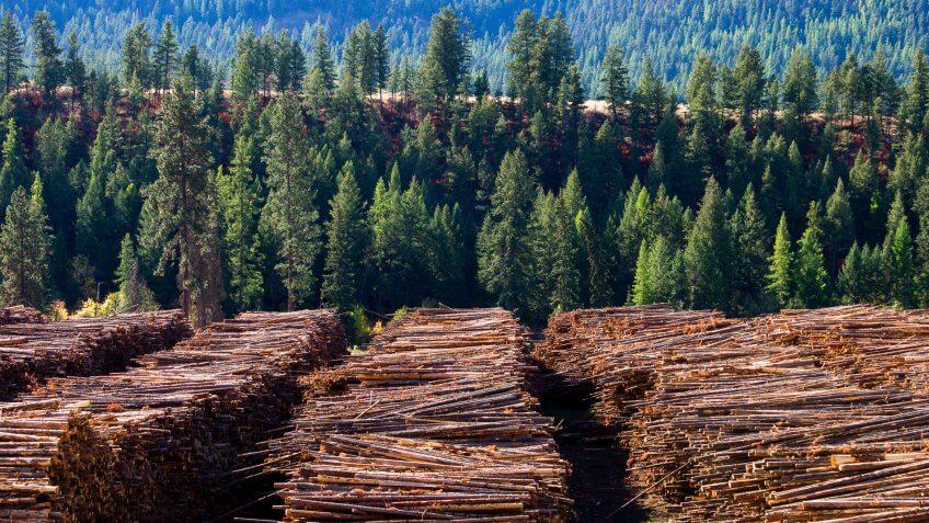 lumber yard in British Columbia Canada