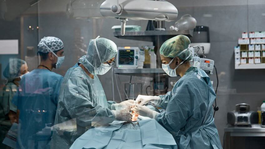 Male and female surgeons performing surgery on dog.