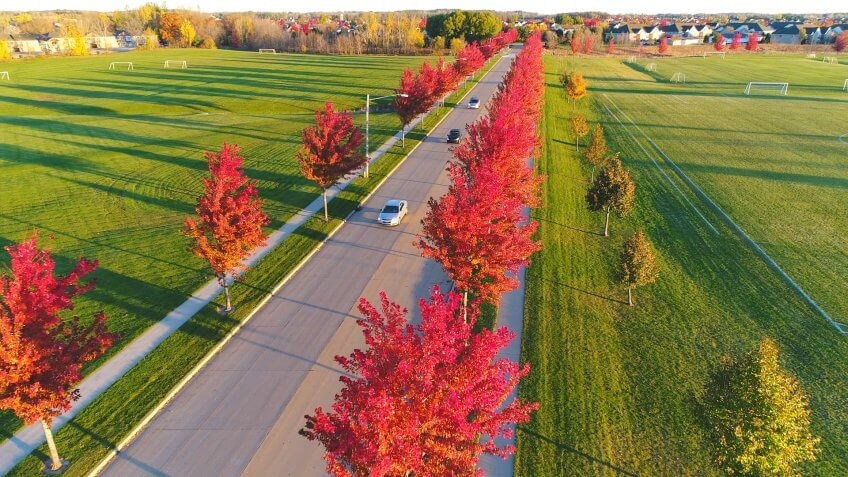 City street lined with amazing Red Maple trees, glowing in the light of Autumn sunrise.