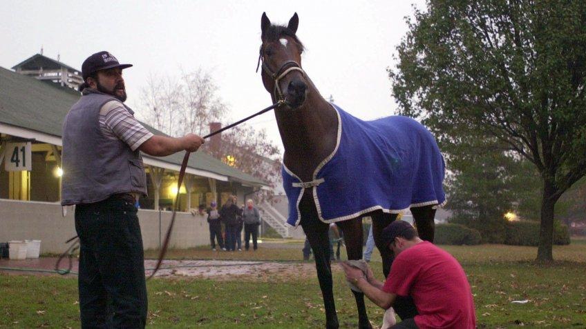 Fusaichi Pegasus thoroughbred horse