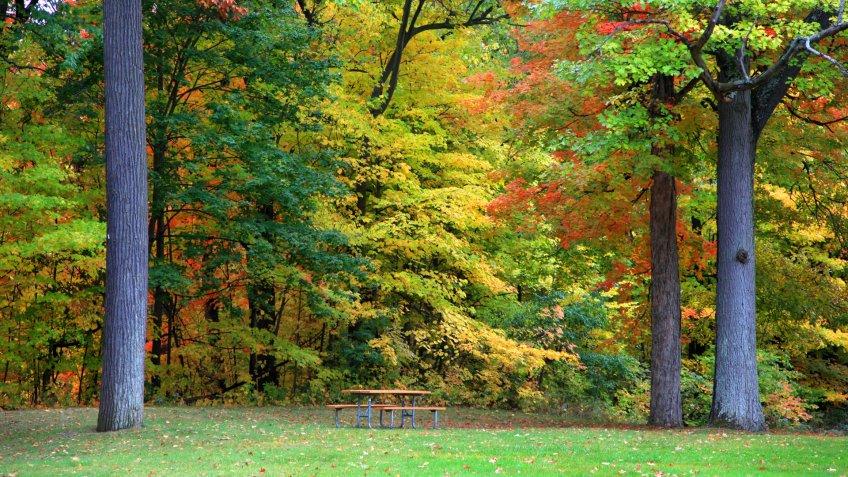 Early autumn trees in Maybury park Novi Michigan - Image.