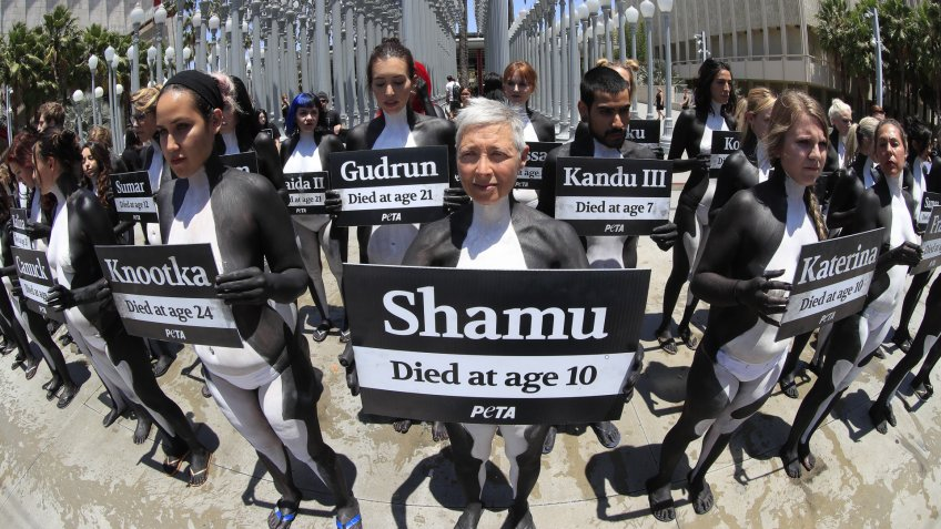 Mandatory Credit: Photo by Mike Nelson/EPA/Shutterstock (8923478d)PETA (People for the Ethical Treatment of Animals) activists holds signs of orca whales that have died in captivity at SeaWorld as they staged a die-in outside the Los Angeles County Museum of Art in Los Angeles, California, USA, 07 July 2017.