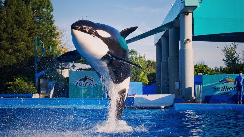 SeaWorld Orca whale show