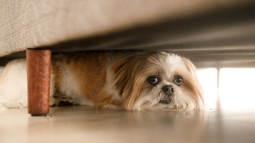 dog hiding under furniture