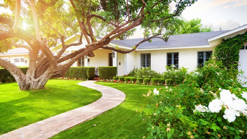 Beautiful white color single family home in Phoenix, Arizona USA with big green grass yard, large tree and roses.