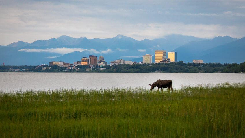 Anchorage Alaska skyline with moose