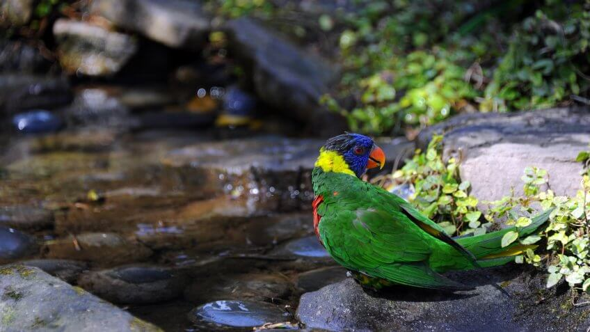 Colorful Lorikeet stands besides pool of water at the Riverbanks Zoo and Garden in Columbia, South Carolina.