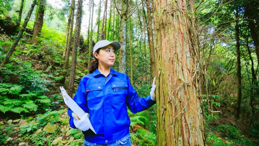 Asian woman engineer working in the forest