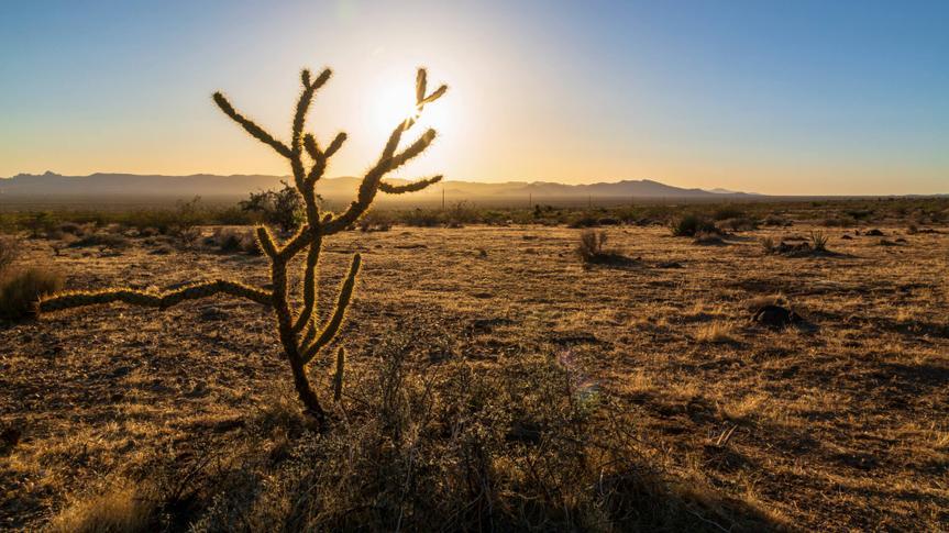 Joshua tree and sunset over North 93 Highway near Kingman, Arizona.
