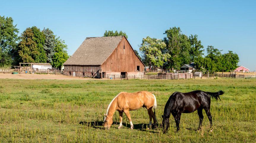 Black and tan horse on an Idaho farm with a wooden barn.