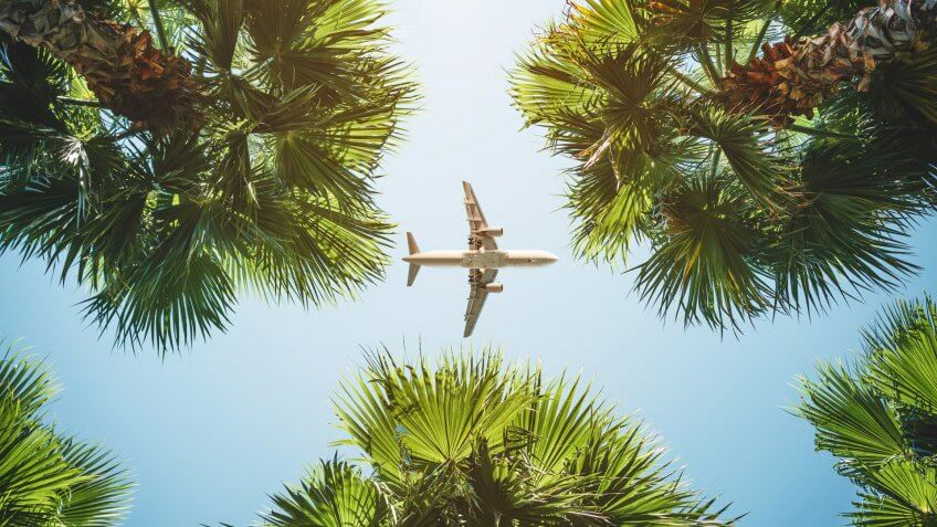 airplane flying through palm trees