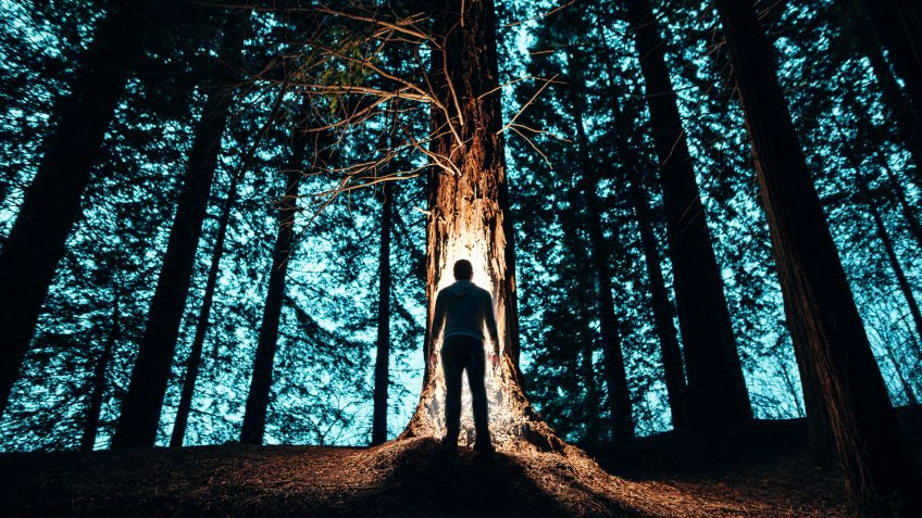 scary forest with man at night