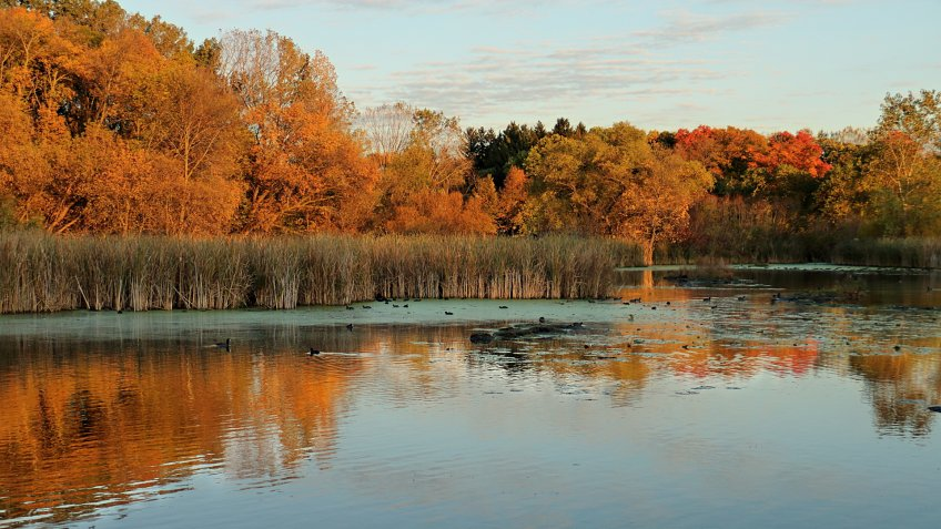 Autumn Colors on Medicine Lake in Plymouth, Minnesota - Image.